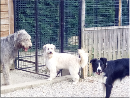Garderie dauphine education canine le passage nord isere