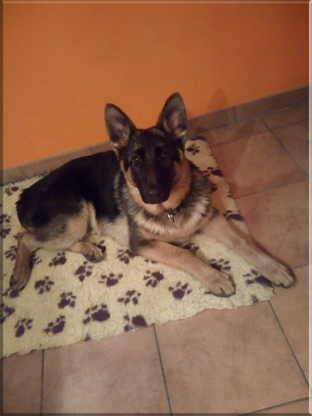 Pension-educative-education-canine-le-passage-nord-isere