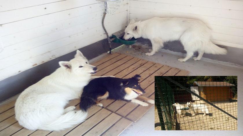 Pension_famille dauphiné éducation canine le passage nord isère 1