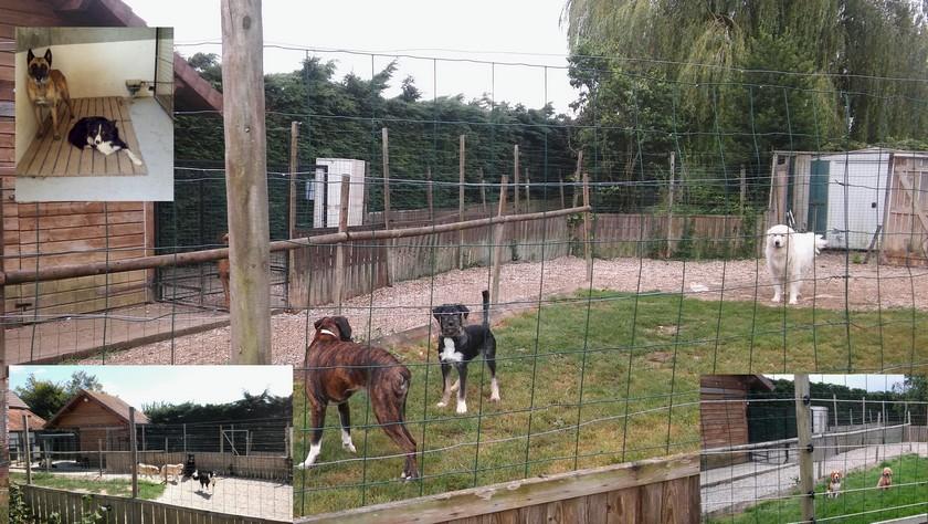 Pension_groupe dauphiné éducation canine le passage nord isère