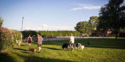 centre dauphiné éducation canine le passage nord isère4