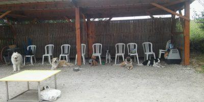 centre dauphiné éducation canine le passage nord isère6