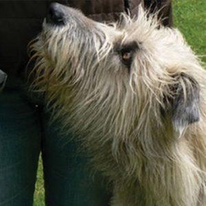 Education de son chiot ou son jeune chien par Dauphiné Éducation Canine