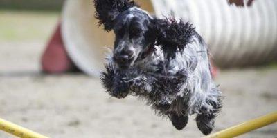 loisirs chiens dauphiné éducation canine