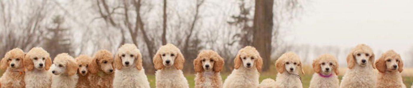 sexualite sterilisation dauphine educatiuon canine le passage nord isere