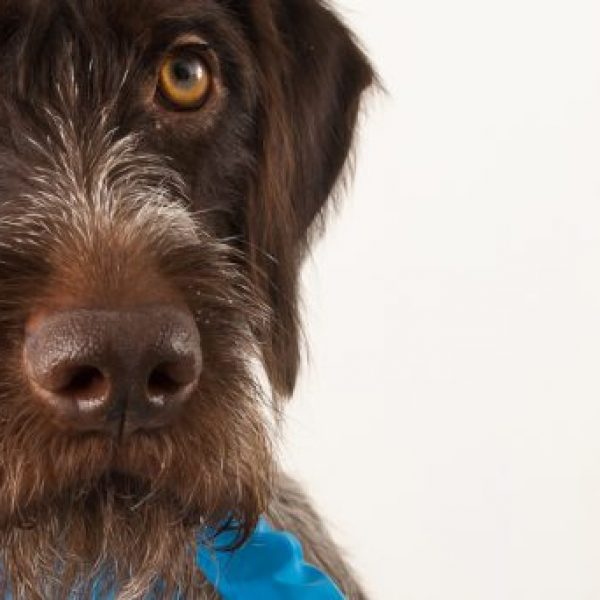 vaccination dauphine education canine le passage nord isere 1