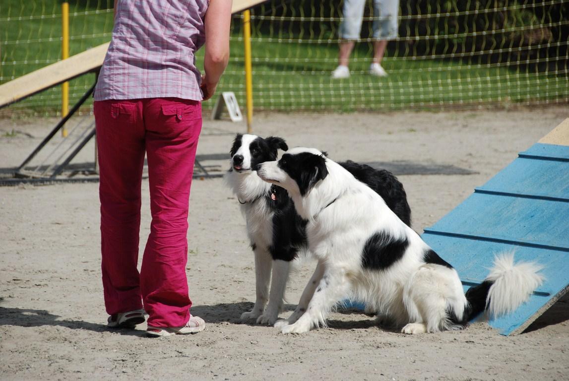 Fête fin d'année 2012 Dauhiné Éducation Canine Le Passage Nord Isère