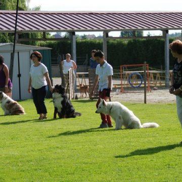 Fête annuelle 2015 dauphine education canine le passge nord isere