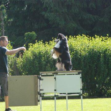 Fête annuelle 2015 dauphine education canine le passge nord isere1