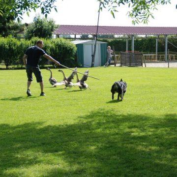 Fête annuelle 2015 dauphine education canine le passge nord isere3