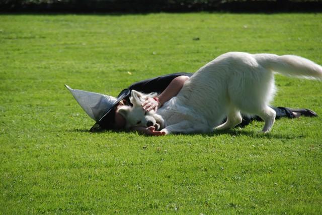 Fête annuelle 2015 dauphine education canine le passge nord isere5