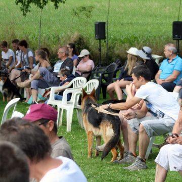 Fête annuelle 2016 dauphine education canine le passge nord isere (1)