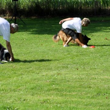 Fête annuelle 2016 dauphine education canine le passge nord isere (5)