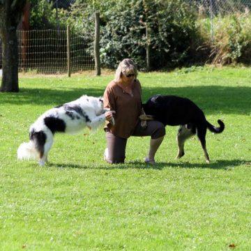 Fête annuelle 2016 dauphine education canine le passge nord isere (6)