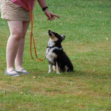 Fête annuelle 2017 dauphine education canine le passge nord isere (2)
