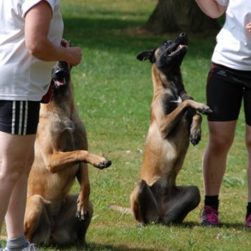 Fête annuelle 2017 dauphine education canine le passge nord isere (3)