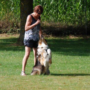 Fête annuelle 2017 dauphine education canine le passge nord isere (4)