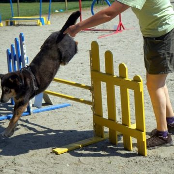 Fête annuelle 2017 dauphine education canine le passge nord isere (7)