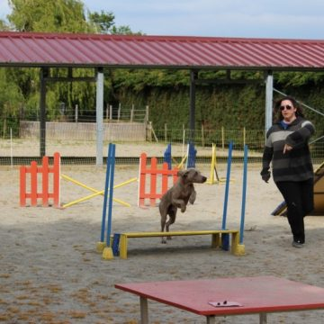 Stage agility 2014 dauphine education canine le passage nord isere (2)