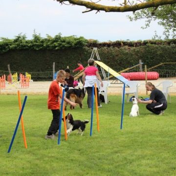 Stage agility 2014 dauphine education canine le passage nord isere (4)
