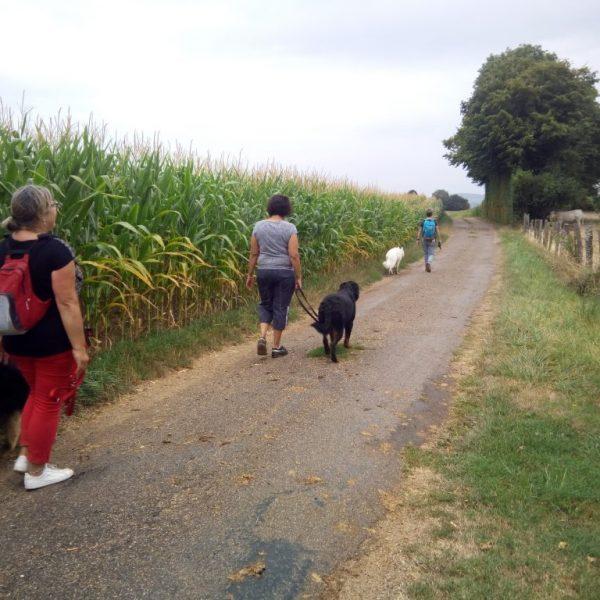 promenade éducative dauphine education canine le passage nord isere (2)