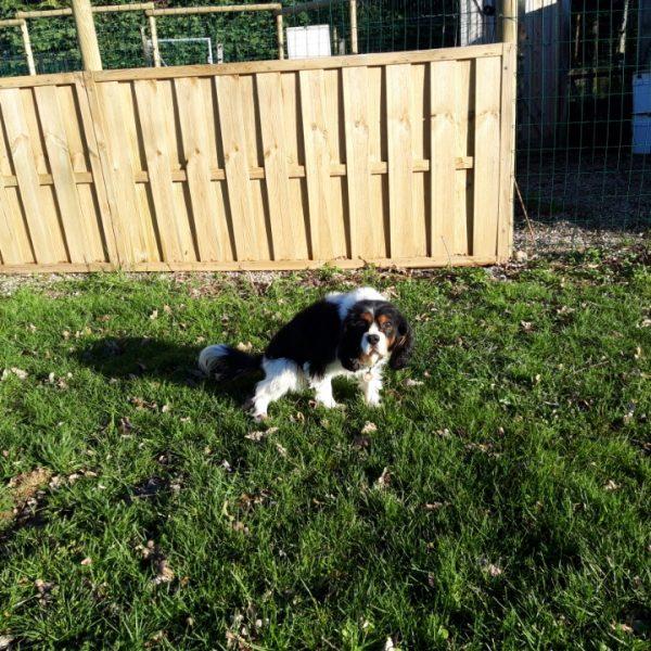 proprete dauphine education canine le passage nord isere2