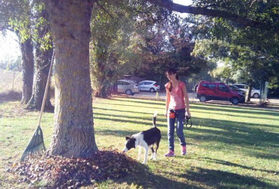stage jouer avec mon chien dauphine education canine le passage nord isere (1)