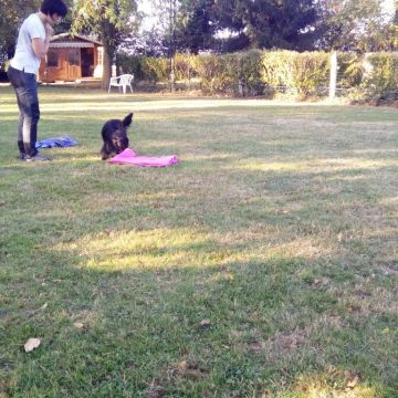 stage jouer avec mon chien dauphine education canine le passage nord isere (2)