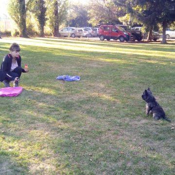 stage jouer avec mon chien dauphine education canine le passage nord isere (3)