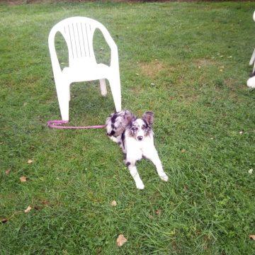 structurer la relation avec mon chien dauphine education canine le passage nord isere (2)