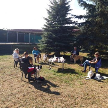structurer la relation avec mon chien dauphine education canine le passage nord isere (3)