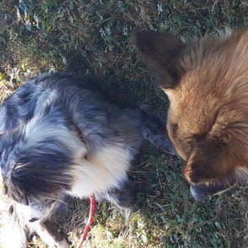 structurer la relation avec mon chien dauphine education canine le passage nord isere (4)