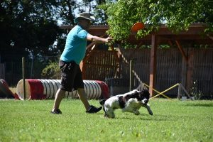 nash frisbee 2 1