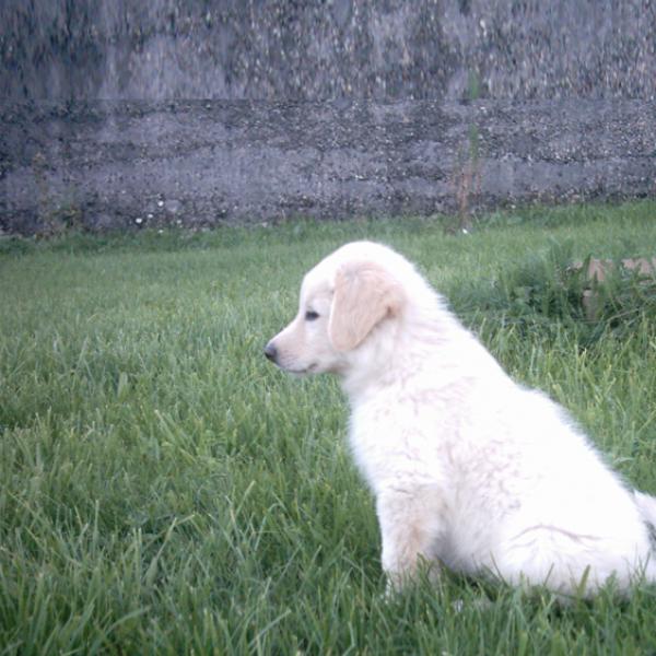 acquerir un chien dauphine education canine le passage nord isere 1 1