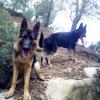 la liberté en promenade dauphiné education canine 1